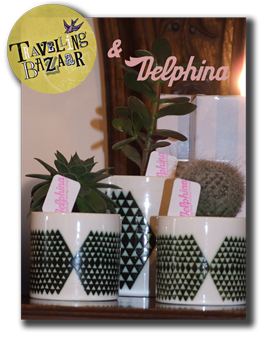 TB Spotlight for the delphina website PNG for the website online.png